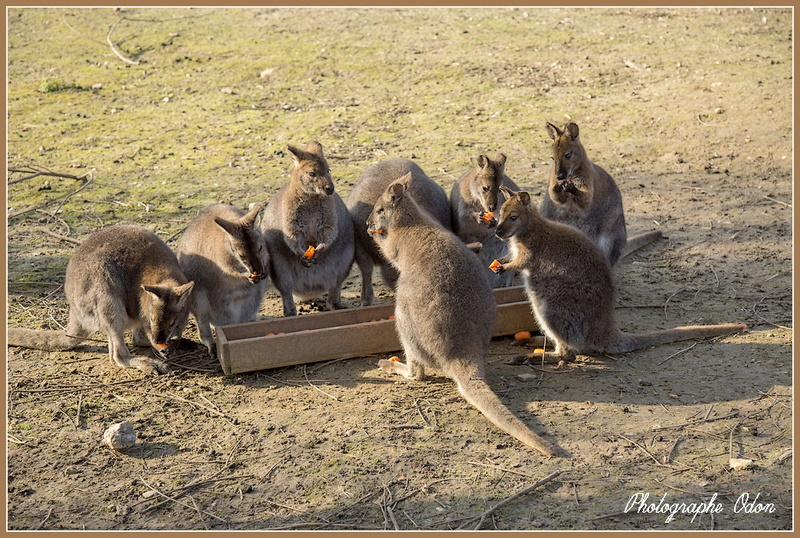 069_Wallaby.jpg