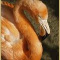 047_Flamant_rose.jpg